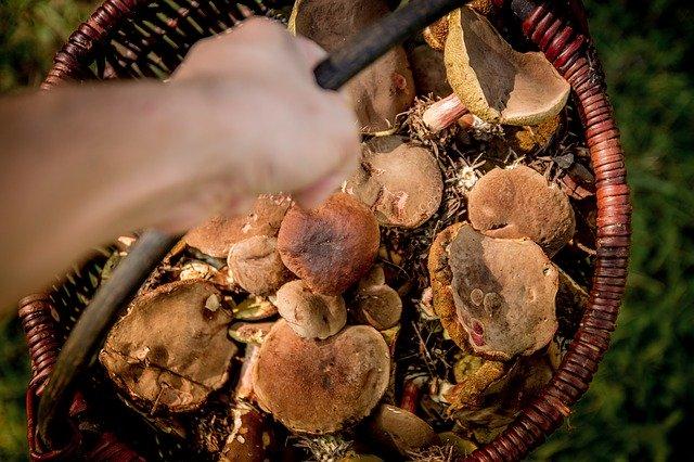 Jak czyścić grzyby?