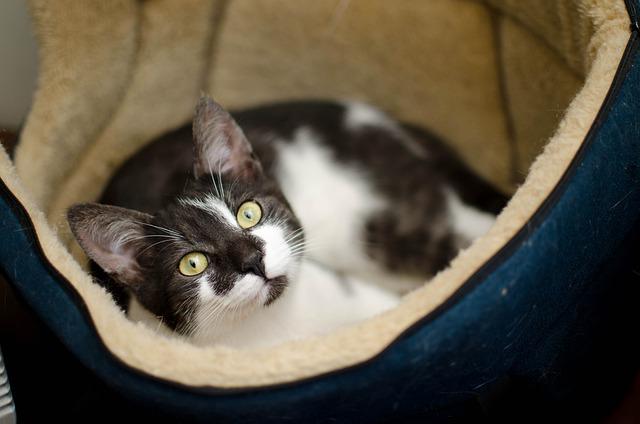 Adopcja kota – o czym warto wiedzieć?
